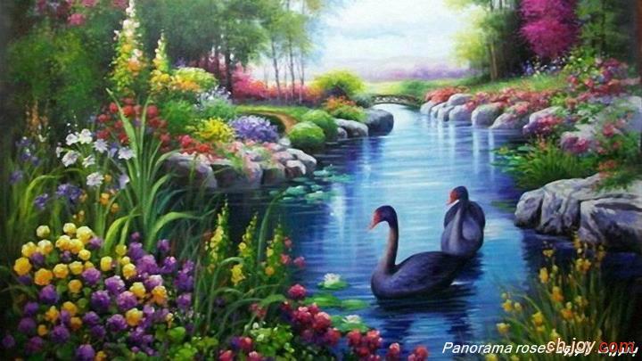 منظر طبيعى جميل جداً لطيور تسبح فى الماء