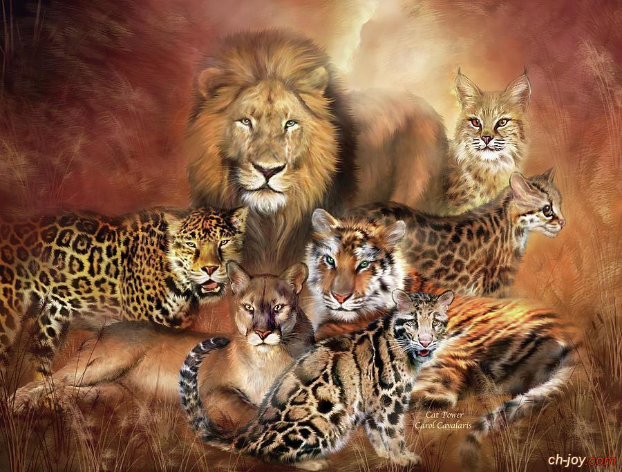 خلفية أسود ونمور