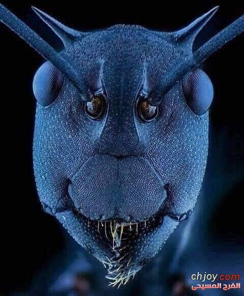 وجه النملة عند تكبيره بمجهر إلكتروني 🐜