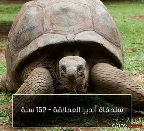 اطول الحيوانات عمرا
