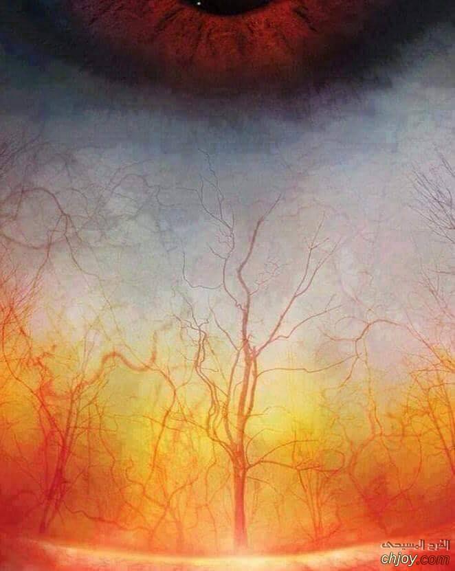 صورة مُقربة لشرايين العين بعد البُكاء  وكأنها غابة تحترق 