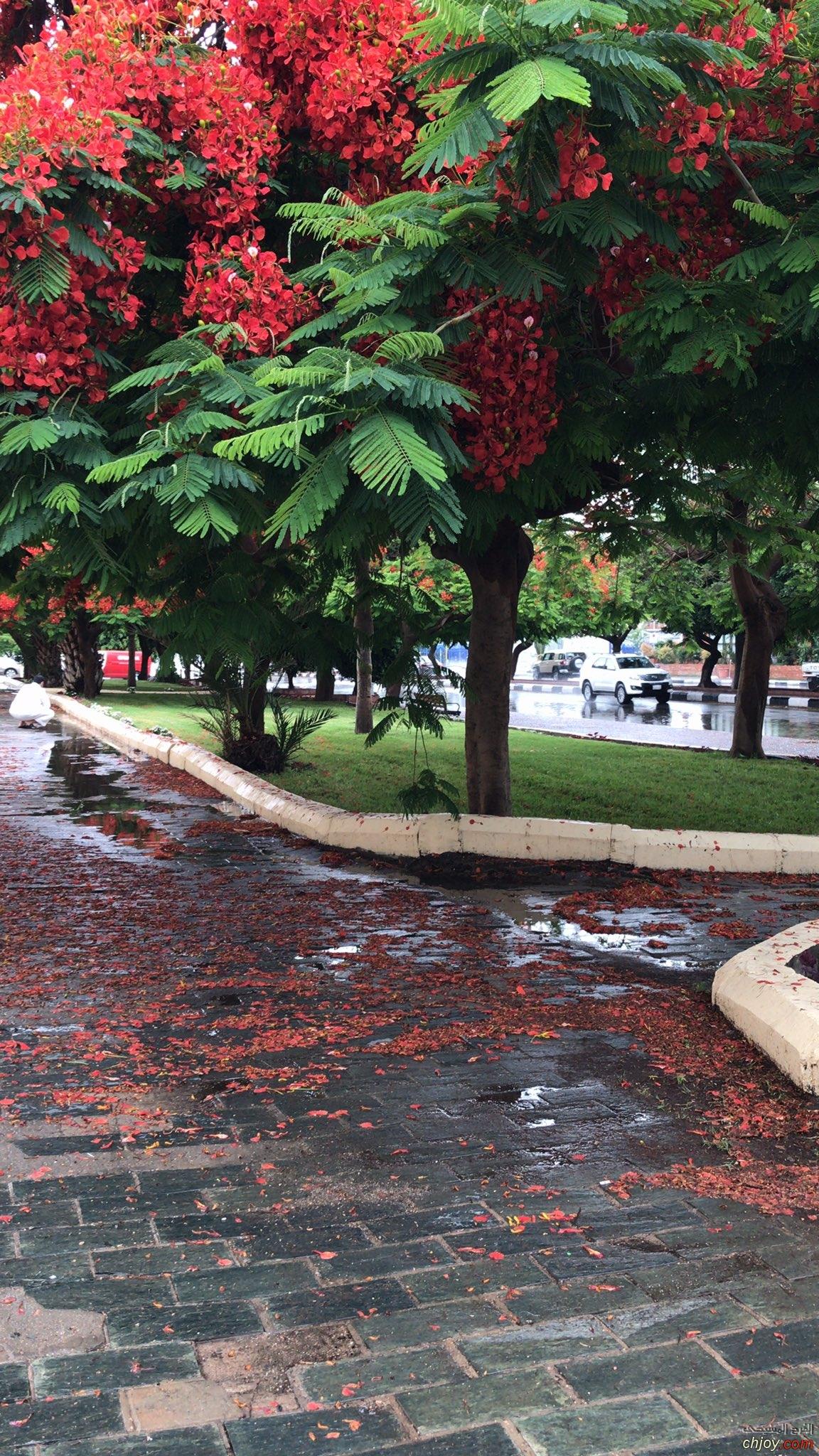 تزينت شورعنا بالمطر ☔️