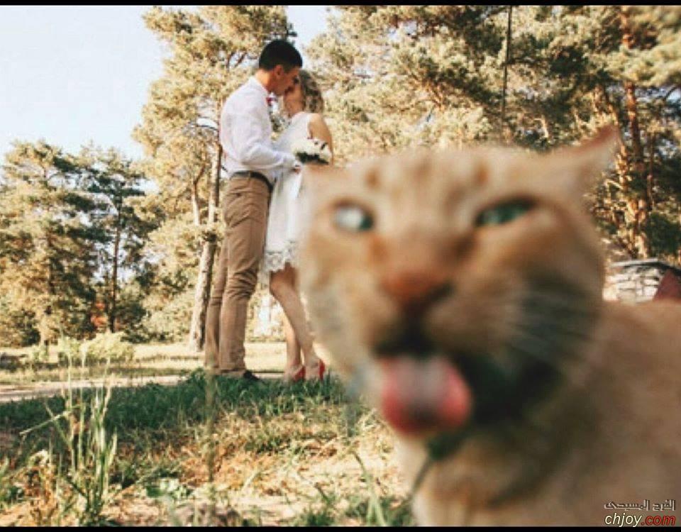 هذه القطة تعبر عن رأيها في الزواج