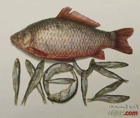 لماذا نأكل السمك فى صيام الميلاد المجيد ؟
