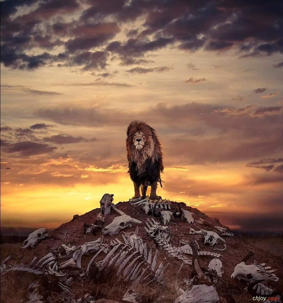 صورة مذهلة جدا لملك الغابة
