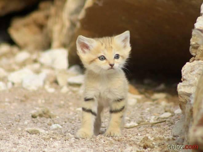 من أكثر الحيوانات هروباً عند الخوف القطط